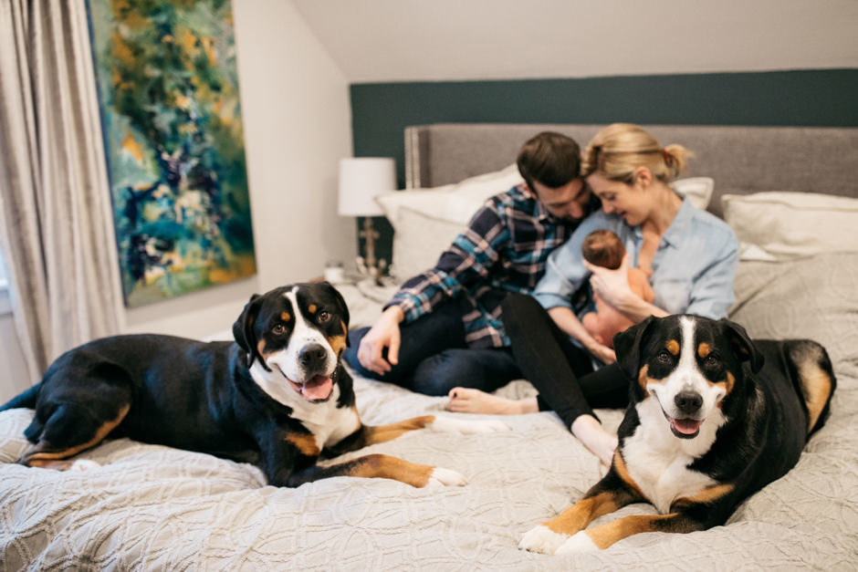 newborn photos with dogs by jenny gg